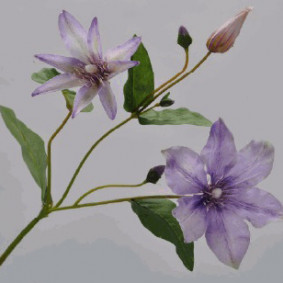 Clematis Spray - Lilac