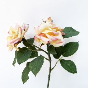 Spray rose - yellow
