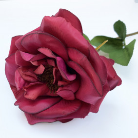 Garden Rose - Burgundy Red