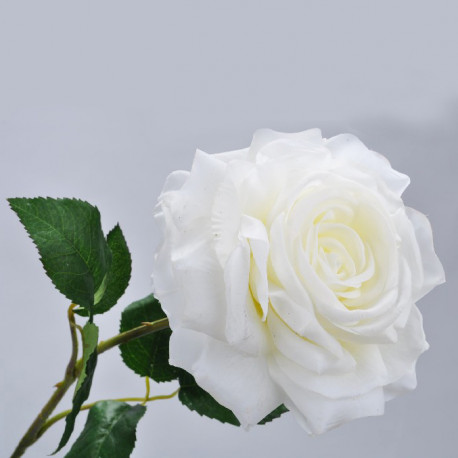 Rose Stem - White